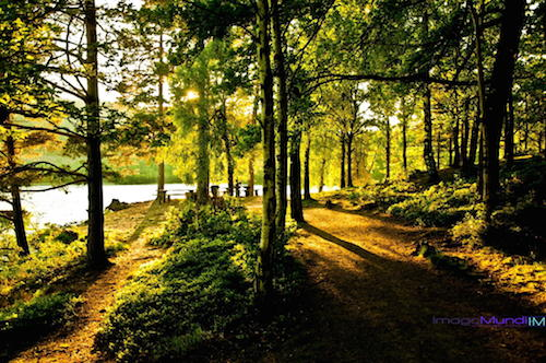 Green Forest by Imago Mundi